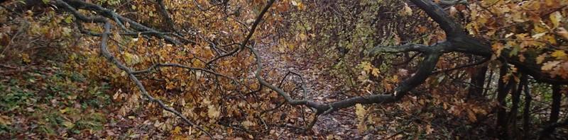 Der var mange væltede træer efter stormen små 2 uger før løbet. Man skulle være kreativ og sno sig lidt, men det gik.